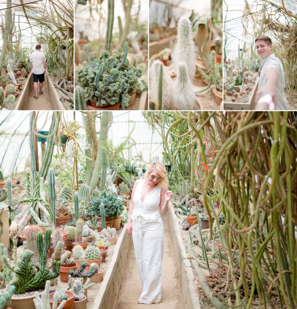 Professional photographs taken in Moorten Botanical gardens in Palm Springs with insane cactus