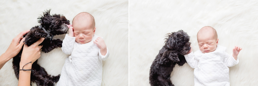 Newborn baby with tiny puppy kissing and snuggling